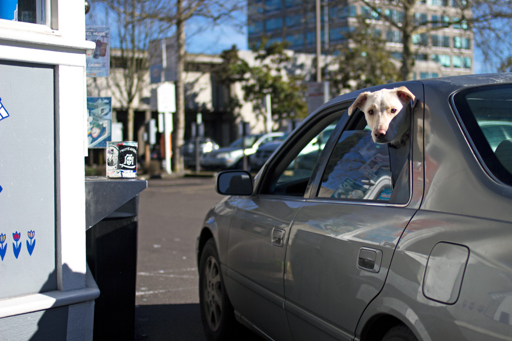 People of Downtown Eugene — Dutch Bros. dog